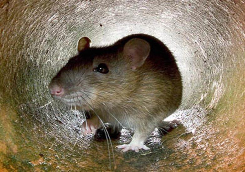 Ποντίκια εμφανίστηκαν σε θάλαμο νοσοκομείου