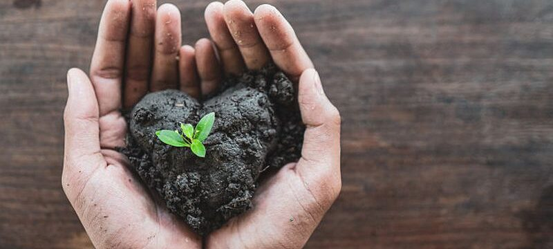hands-holding-earth-soil-with-new-plant-growing_24899-1953