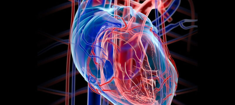 human_heart_2_0_800x500